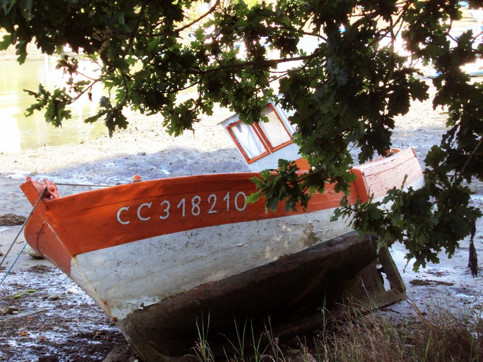 Hirondelle de mer cc318210